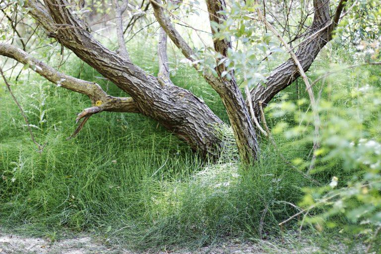 Árbol entorno Benizar